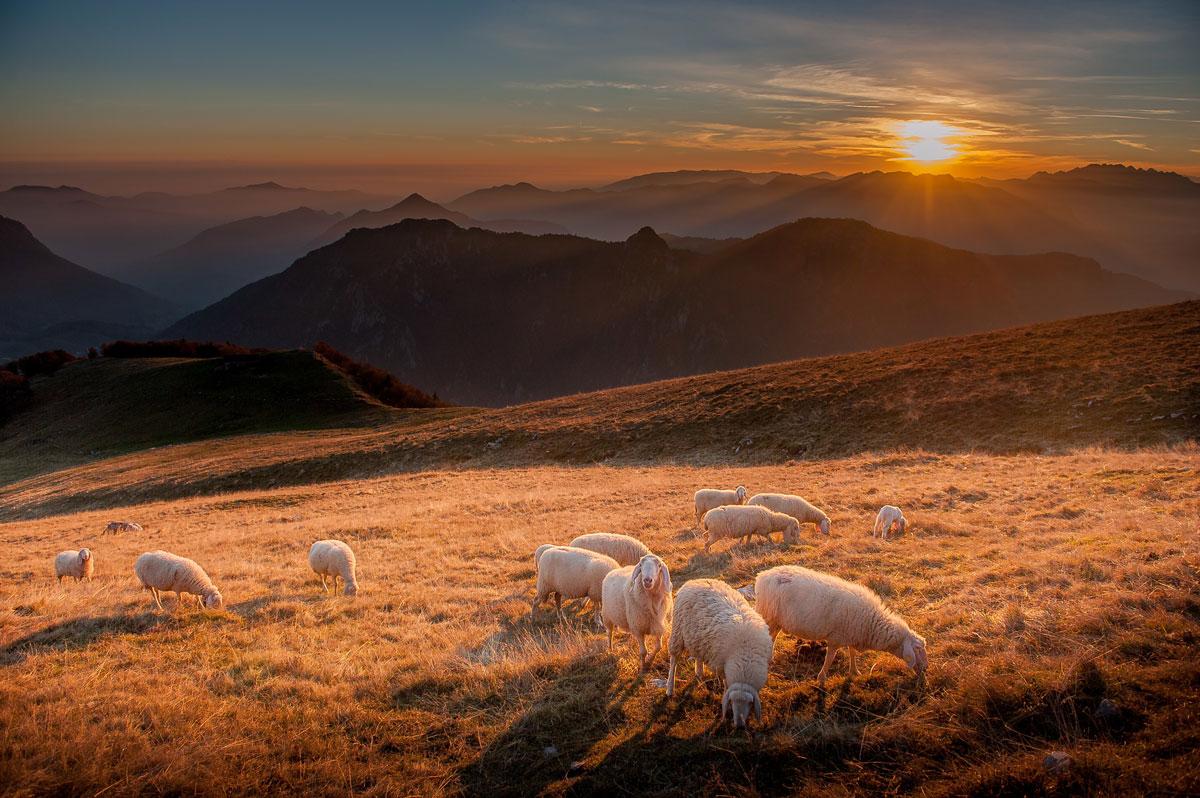 Schafsherde in Bergen bei Sonnenuntergang